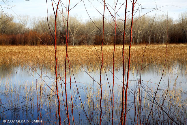 A scene along the marshes in the Bosque del Apache NWR, Socorro, NM