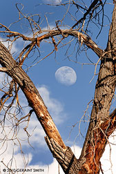 cottonwood moon