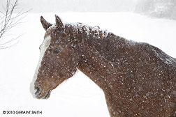 Horse in the snow in Taos