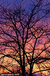 sunset through a tree in a Taos