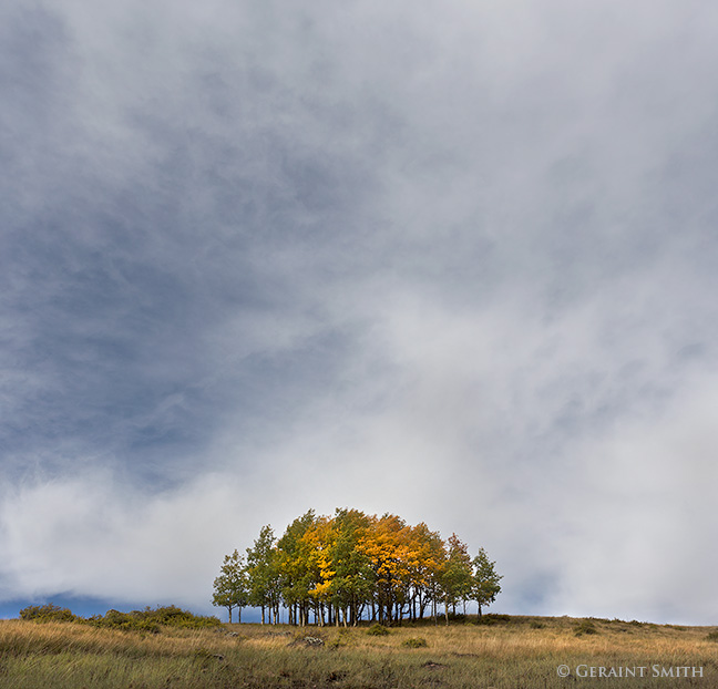 The Stand of aspens, cumbres pass new mexico