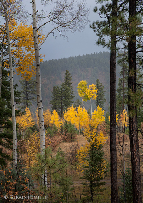 aspens garcia park, kit carson national forest