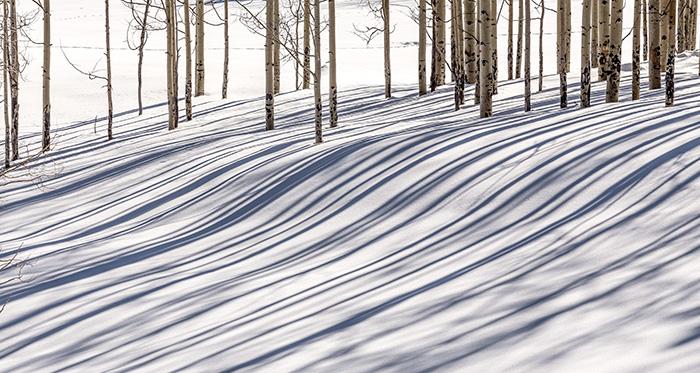 Aspen Snow Shadows