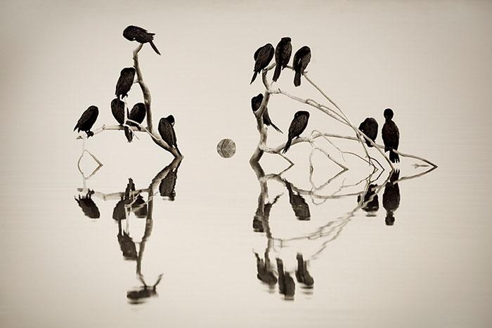 Cormorant Roost
