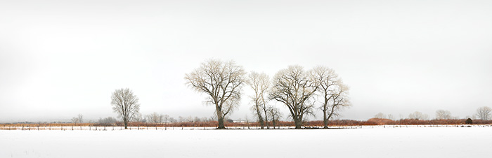 Red Willow Cottonwood Snows