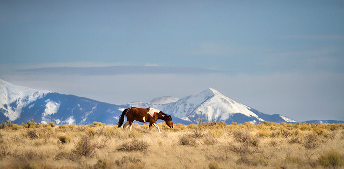 Pinto Mountain Mesa