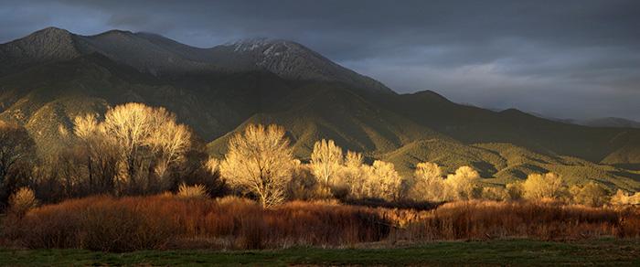 Taos Cottonwoods