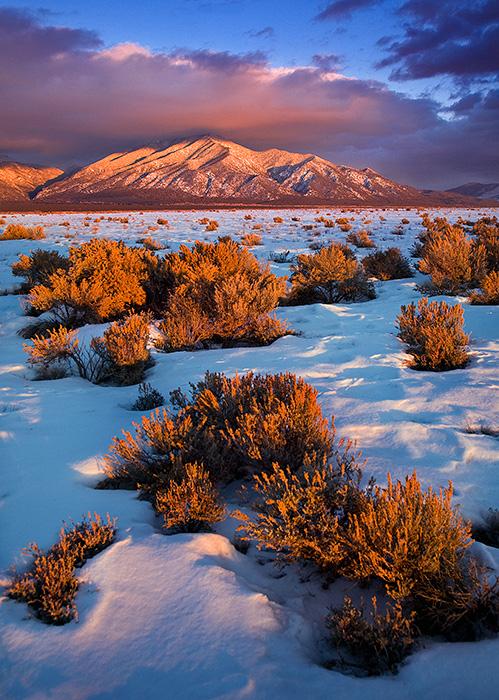 Taos Mountain Winter Sage