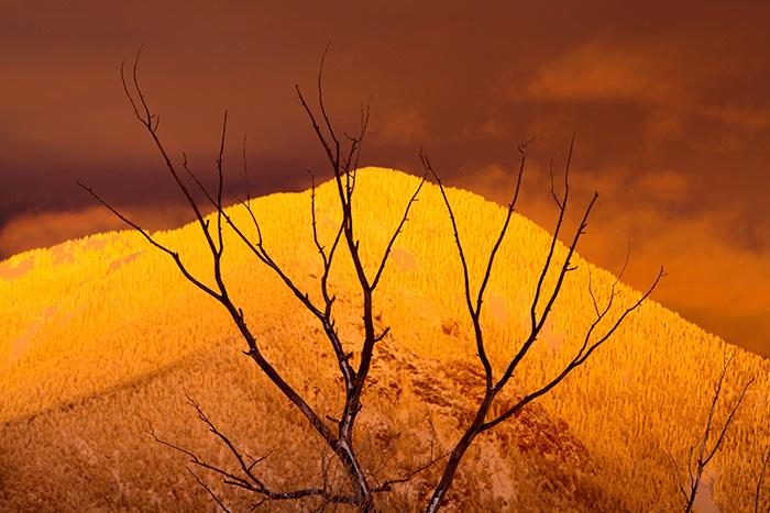 Taos Mountain Treetop