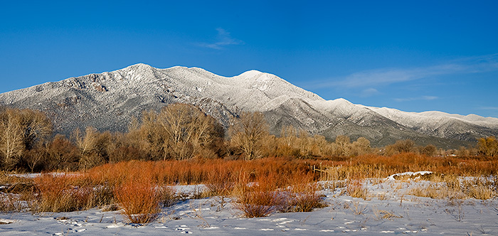 Taos Mountain Willows