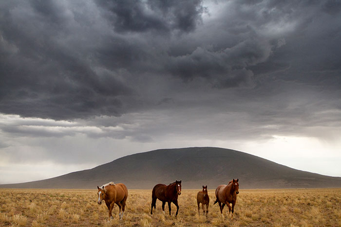 Ute Mountain Horses