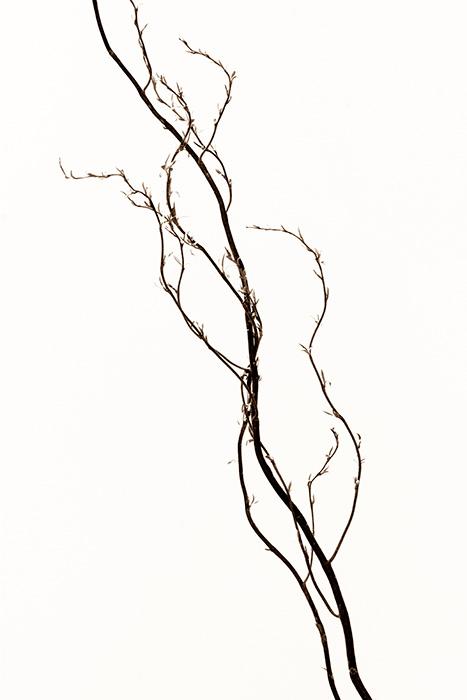 Figure Vine