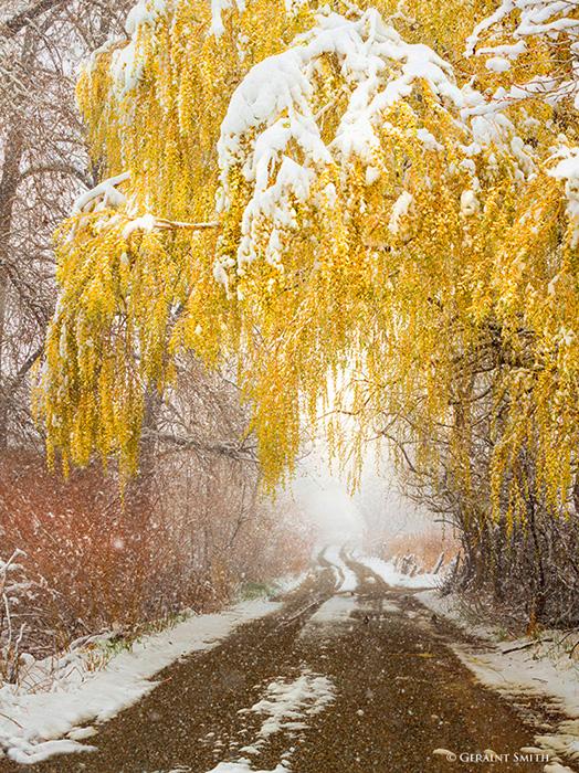 Winter Willow Lane