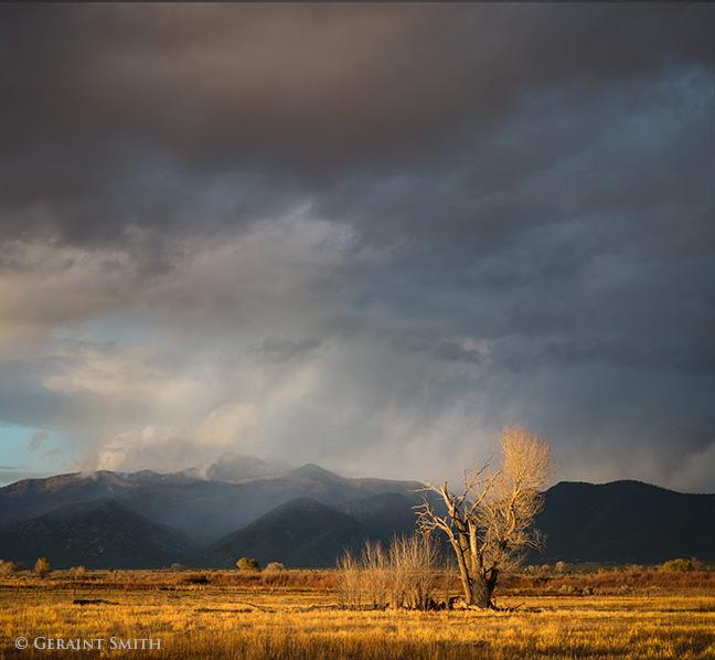 This Evening Light, El Prado, New Mexico