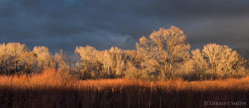 sunset on Red Willow Cottonwoods taos new mexico