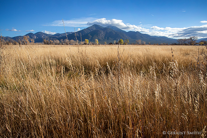 Tall grasses taos mountain meadows