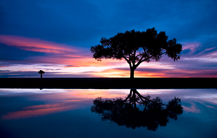 Lone Tree #2