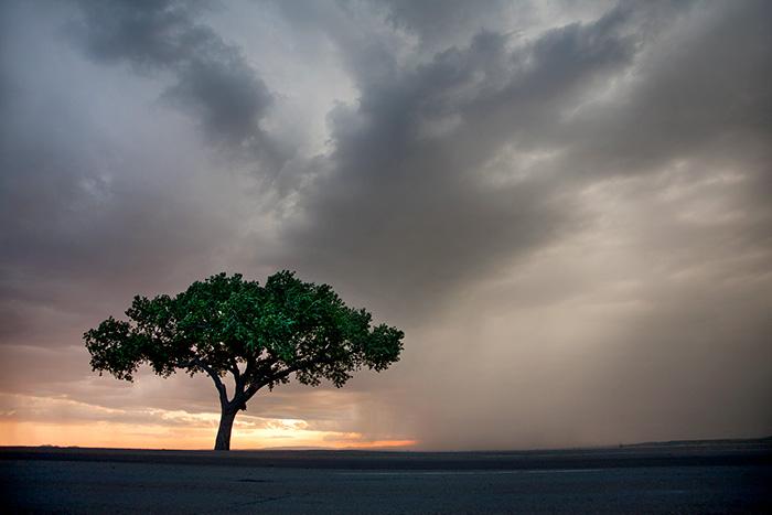 Lone Tree #1