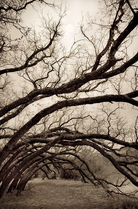 Tree Boughs