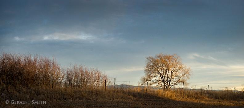 arroyo seco tree