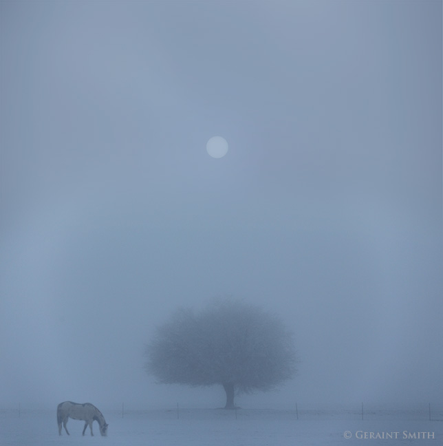 Horse tree and sun in the morning fog