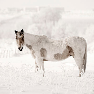 Archive index 2009 photo of the day archive horse in winter in the ranchos valley new mexico