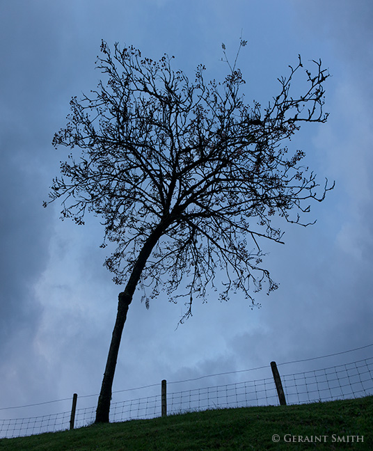 Tree and sky, clouds and fence.