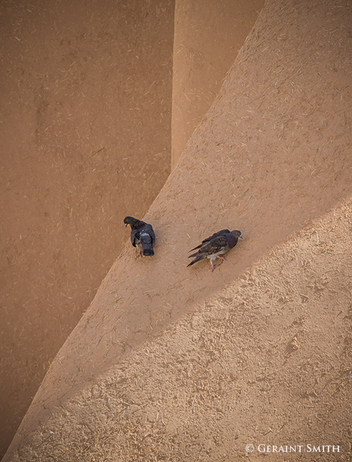 Adobe route pigeons on adobe buttress saint francis church ranchos de taos