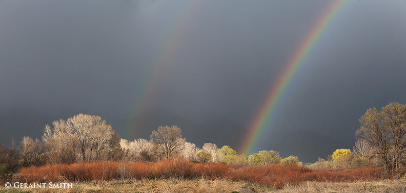 spring rainbows and red willows