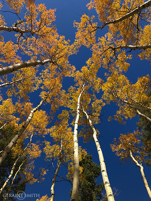 Highway 17, Aspens Turning In Colorado