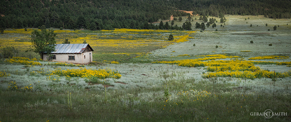 Homestead meadow