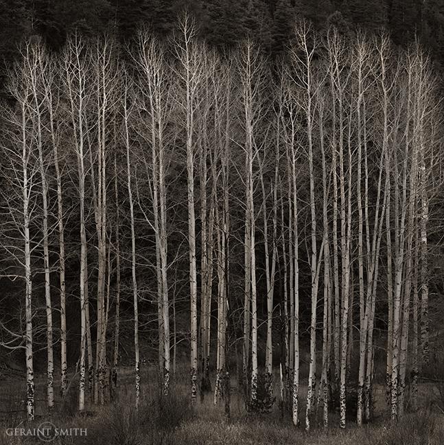Winter White Aspens, Moreno Valley