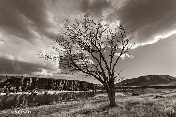 Rio Grande tree southern colorado