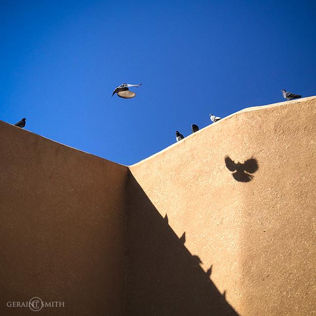 Saint Francis sentinel pigeons