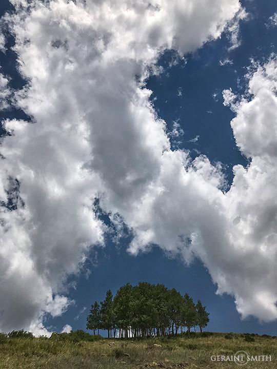 Tree grove Sky, Cumbres Pass, Highway 17, Colorado