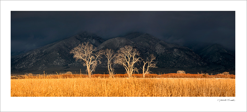 Cottonwood Light