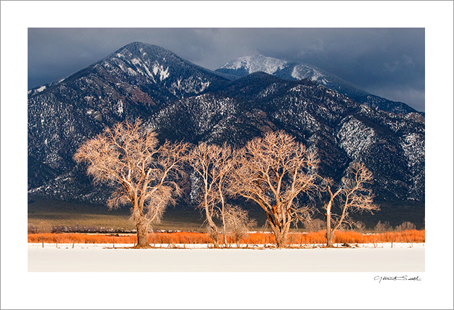 Cottonwood Winter Light