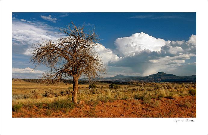 Lone Tree Abiquiu