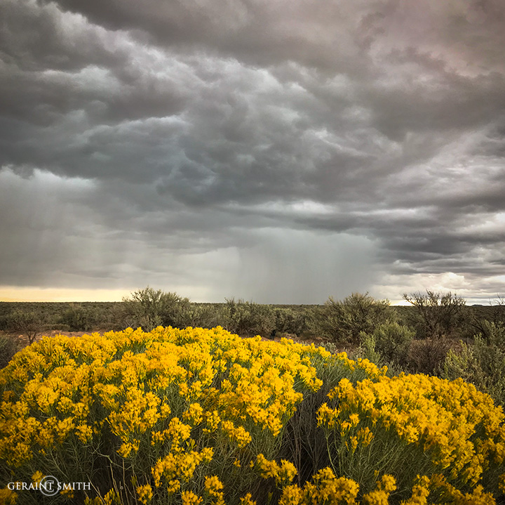 Rabbitbrush and Storm Cell