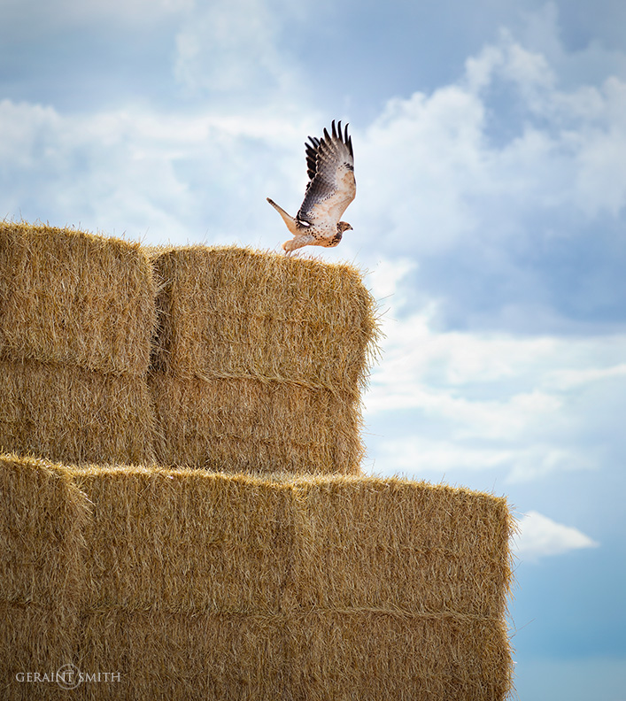 Monarch of the hay bales