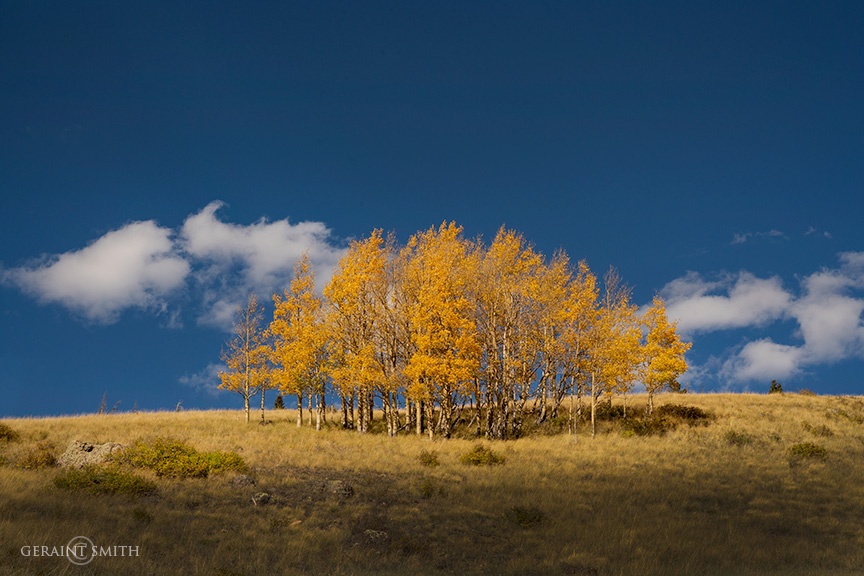 Hillside Aspens, Cumbres Pass