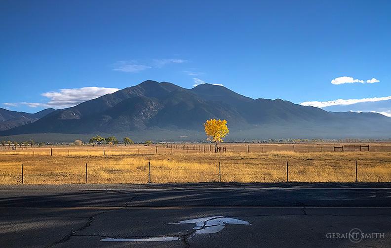 Mountain Meadow Cottonwood, Taos NM