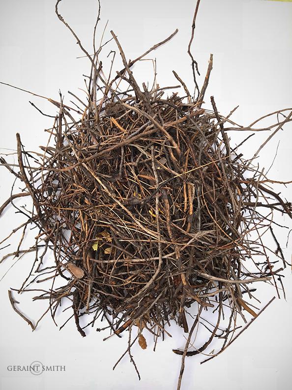 Magpie nest number #2