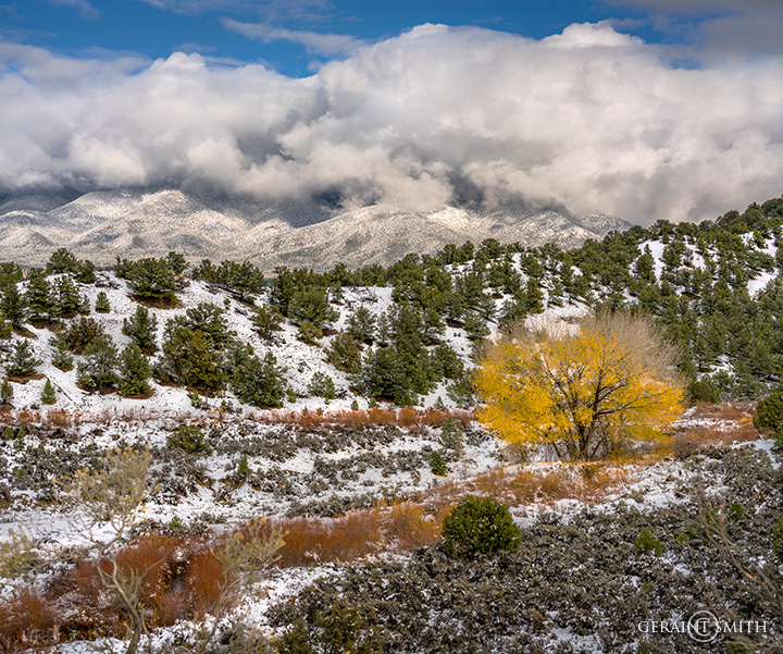 Cottonwood, Red Willows, Mountain Snow