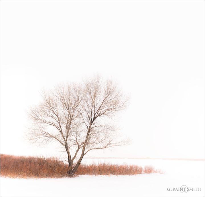 Winter Lake, Red Willows, San Luis Valley