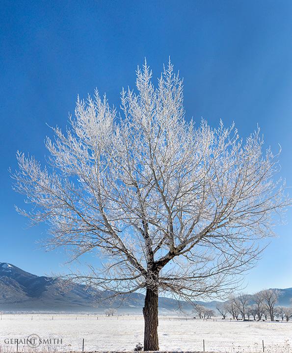 Hoarfrost, Glowing Crystal Tree