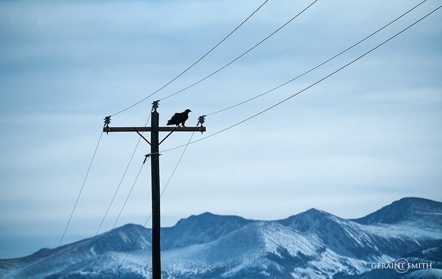 Golden Eagle silhouette, Sangre De Cristo Mountains