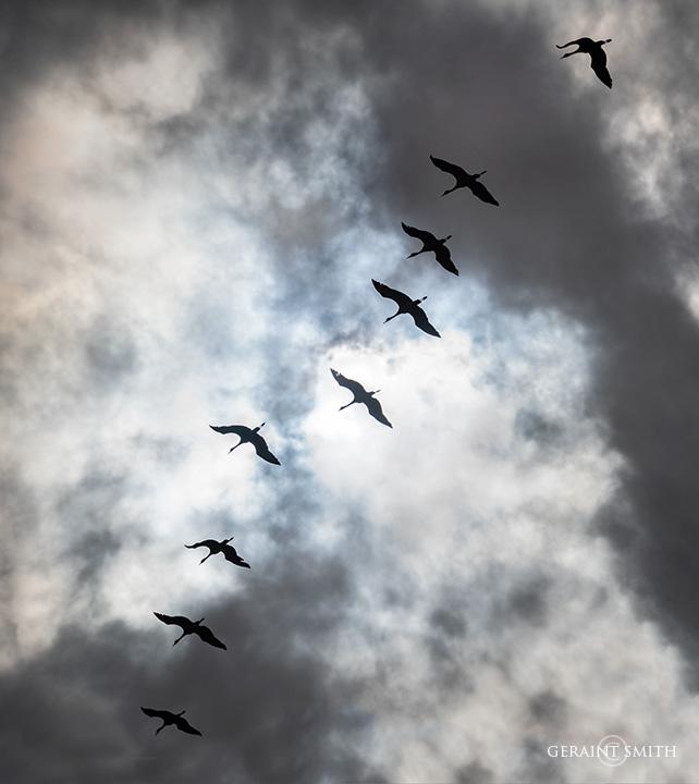 Monte Vista NWR, Sandhill Cranes