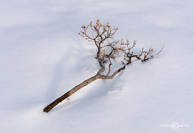 Snow branch Valdez