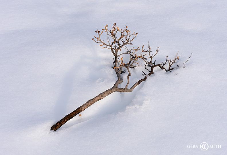 Snow branch Valdez